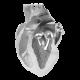 Aortic Steonisi Regurgitation